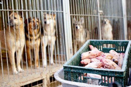 Pavlov's dogs, psychology-based marketing, marketing strategies